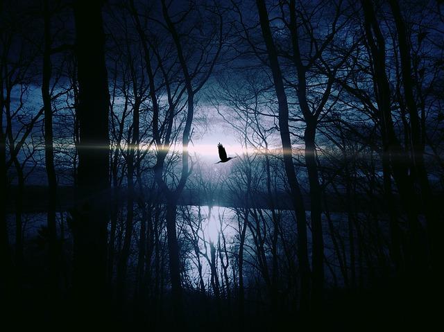 pták nad vodou