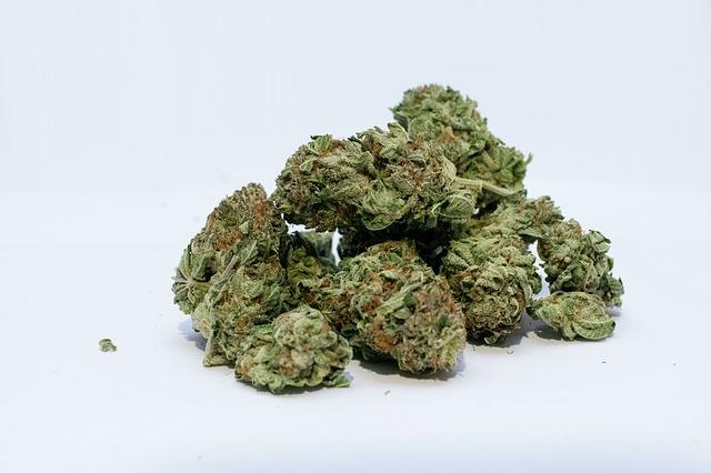 sušená marihuana